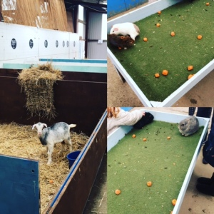 swithens-farm-leeds-rothwell